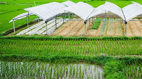 พัทลุงเมืองเกษตรอินทรีย์ วิถียั่งยืน