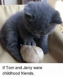 25+ Best Memes About Tom | Tom Memes