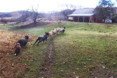 Back Barn Farm by Back To The Barn Bedlam Farm