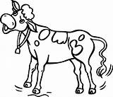 Cow Coloring Clipart Cows Clip Drawing Cliparts Colouring Kid Clipartbest Library Popular Getdrawings Clipartmag sketch template