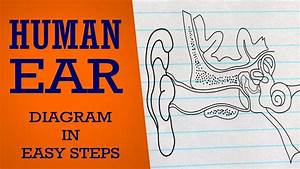 How To Draw Human  Ear In Easy Steps  Neural Control