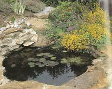 Water Garden Water Gardening Installing A Pool For Water Plants Water Garden