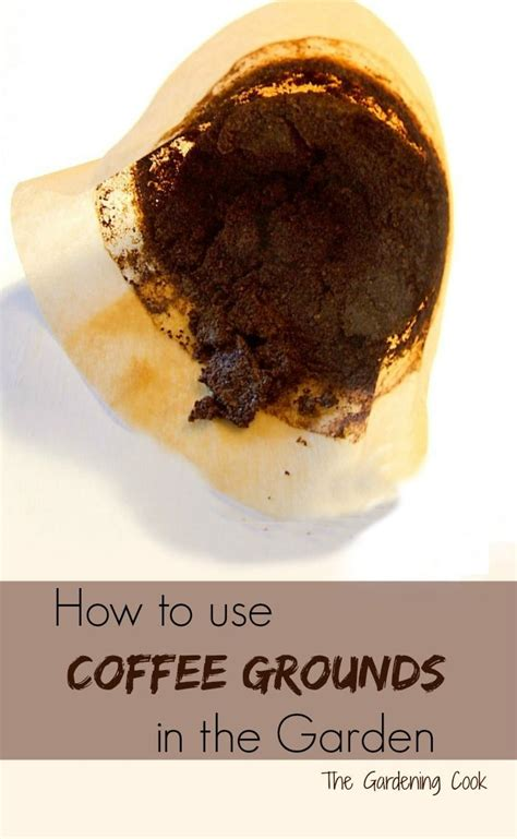 We all know that we need to add fertilizer or compost to the soil for enriching the nutrient content of the soil. Coffee Grounds are great for Camellias, Hydrangeas & Roses | Uses for coffee grounds, Vegetable ...