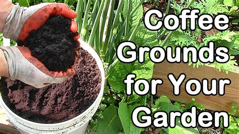Free Coffee Grounds!  Permablitz Melbourne