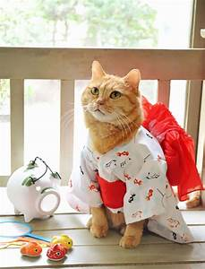 Cats La : cats in kimonos are a thing in japan bored panda ~ Orissabook.com Haus und Dekorationen