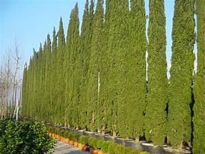Schmale Bäume Für Kleine Gärten : in kleinen g rten die richtigen akzente setzen mit ~ Michelbontemps.com Haus und Dekorationen