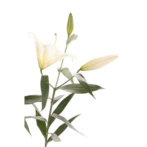 spring yellow oriental lily bouquet spring lilies