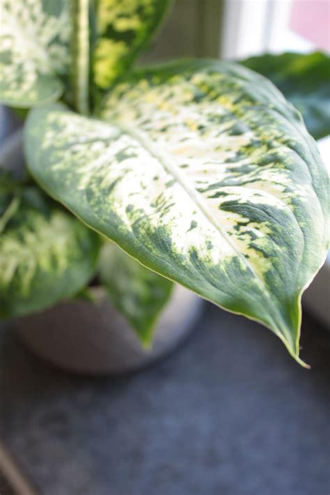 zimmerpflanzen fraeulein teil  der wohnzimmer dschungel