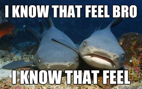 That Feel Meme - i know that feel bro i know that feel compassionate shark friend quickmeme