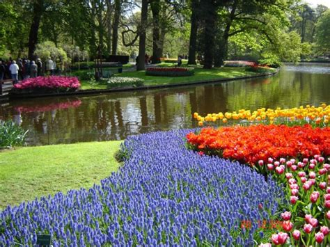 La cules trandafiri pt dulceata Olanda, Germania – Locuri Munca
