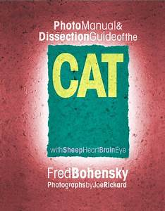 Photo Manual  U0026 Dissection Guide Of The Cat  With Sheep
