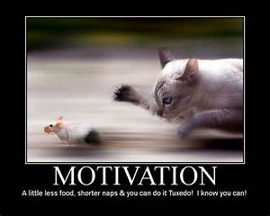 16 Cat Motivational Posters That You Can Agree With ...