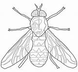 Fly Coloring Pages Cartoon Horse Flying Bird Insect Insects Outline Getcoloringpages Printable Popular sketch template