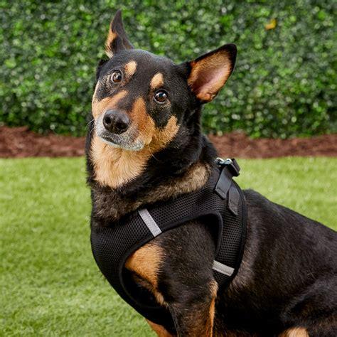 frisco small breed soft vest dog harness black