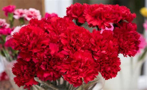 popular types  red flowers   garden