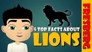 Top 5 Fun Facts About Lions For Children   Animals For