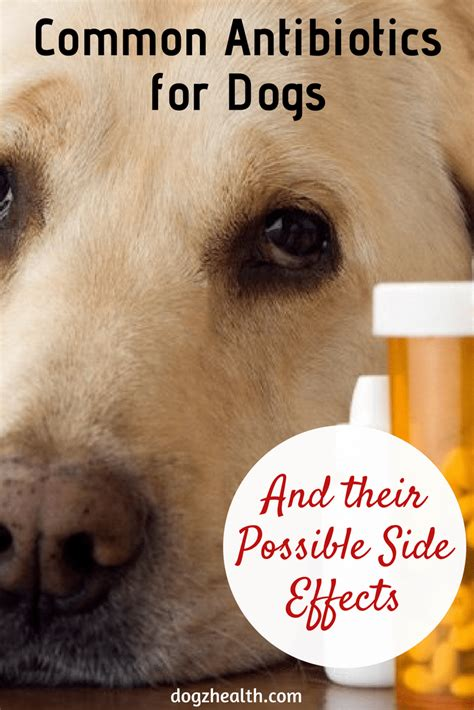antibiotics  dogs canine antibiotics side effects