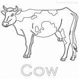 Cow Coloring Dairy Printable Getdrawings Getcolorings sketch template