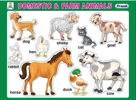 frank domestic  farm animals domestic  farm