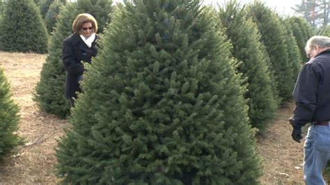 nj farms where you can cut down your own christmas tree