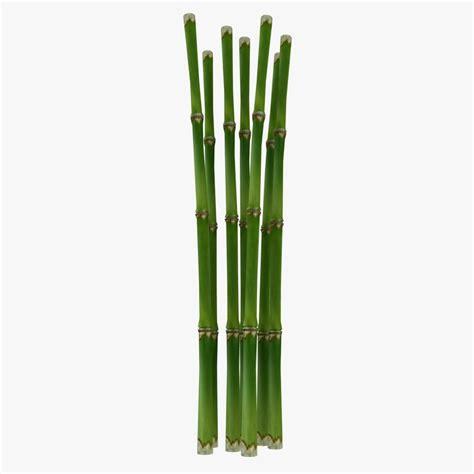 3d fresh bamboo