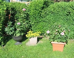 Kuebelpflanzen Fuer Terrasse : pflanzk bel f r die gestaltung von terrase und garten ~ Orissabook.com Haus und Dekorationen