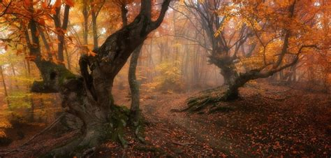 Gold Autumn Wallpapers by Forest Magic Fall Trees Leaves Mist Path Roots