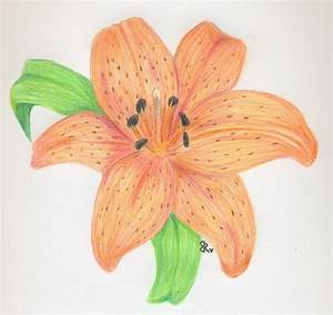 Tiger Lily by Heltinde on DeviantArt