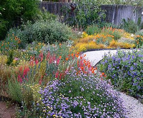 california native plants garden tips coloradoboulevardnet