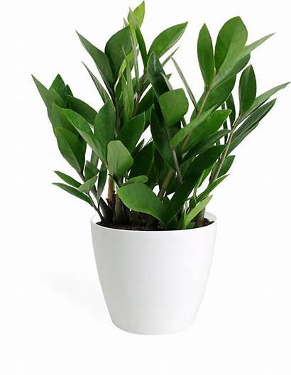Potted Plants Plant Flowers Indoor Desk Trees