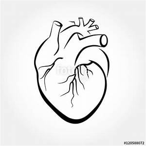 Easy Human Heart Drawing