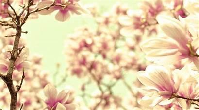 Magnolia Pink Pixelstalk Backgrounds