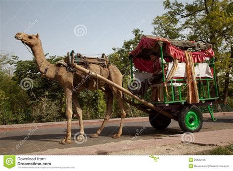 indian cart camel pulling cart in india editorial image image 26632125
