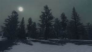 Nighttime scenery with the snowy pine forest under full ...