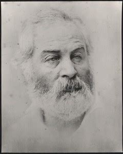 Walt Whitman The Wound Dresser Meaning by Walt Whitman S War Work Primary Sources In The