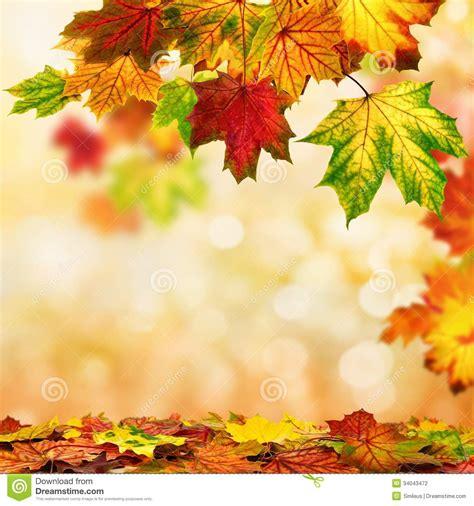 autumn bokeh background bordered  leaves stock