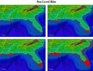 Sea-Level Rise: Rabbits are in Trouble | Marine Science Today