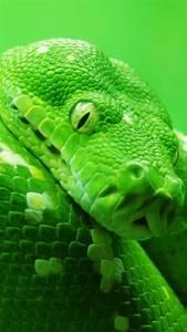 Wallpaper Snake  Green  4k  Animals  14978