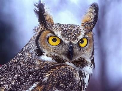 Bird Wallpapers Owl Desktop Eagle Wisdom Birds