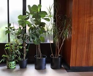 Plante Verte D Appartement : plantes vertes exotiques ~ Premium-room.com Idées de Décoration