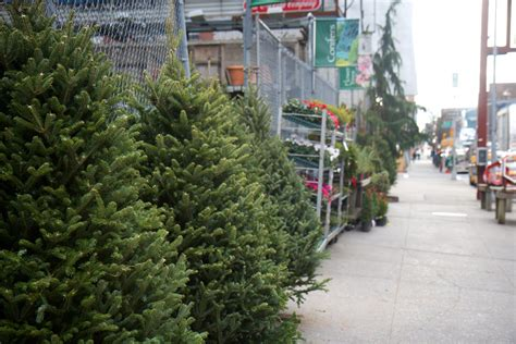 wwwhouston garden center xmas tree sale it s trees time hell s kitsch