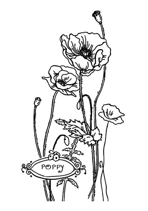 lovely california poppy  valentine day coloring page