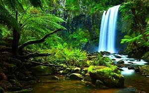 Rainforest Ecosystem - ThingLink