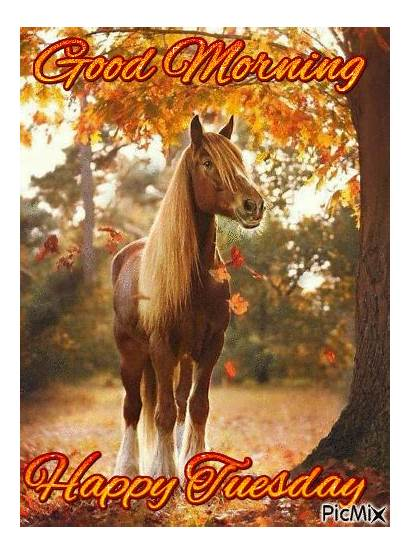 Morning Tuesday Horse Happy Horses Quotes Gifs