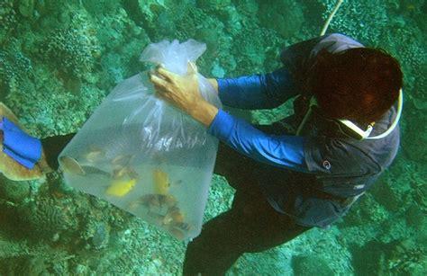 98 des poissons destin 233 s au commerce d aquariums aux philippines meurent la premi 232 re 233 e