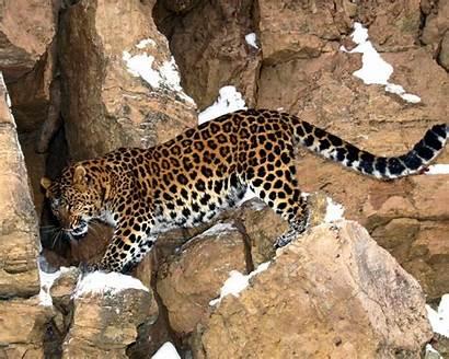 Amazing Fish Cat Wallpapers Animals Lion Wild