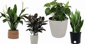 Amazon, Save, Big, On, Costa, Farms, Premium, Live, House, Plants, -, Mylitter