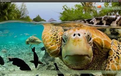 Bing Changer Desktop Today Background Save Archive