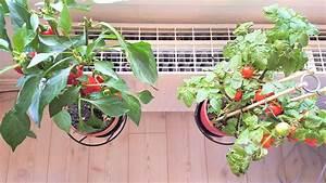 Tomaten In Der Wohnung : wohnen auf engen raum das fr he vogerl ~ Lizthompson.info Haus und Dekorationen