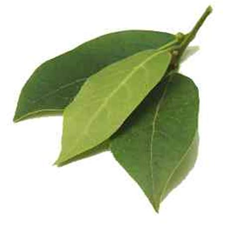 substitute for bay leaf cook s thesaurus european herbs